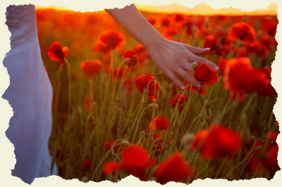 Young woman touching Poppy flowers walking through field at sunset, mid section, close up - Fakenham, Norfolk, England